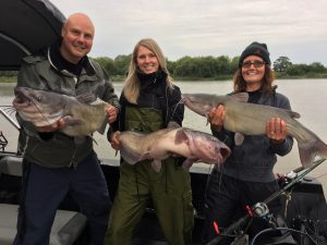 3 anglers catching huge catfish